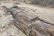 70 Petrified Forest-05.jpg
